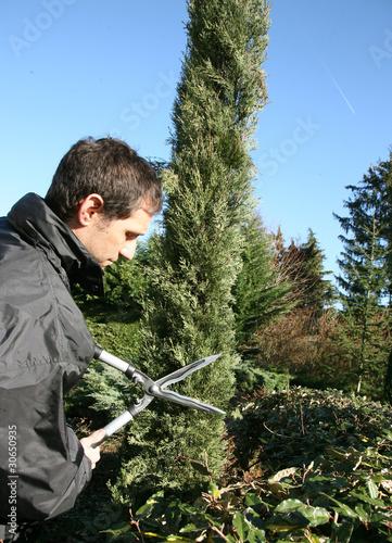 Jardinier p pini riste paysagiste taille un cypr s de for Tarif jardinier paysagiste