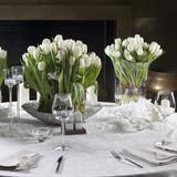 Fototapety Tulip in vase