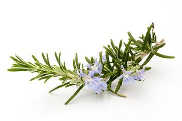 Rosmarinzweig mit Blüten, Makro, isoliert