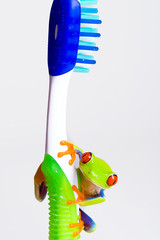 frog on a toothbrush