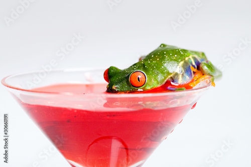 Frog drinking out of a martini glass