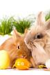 zwei süße Kaninchen mit Ostereiern