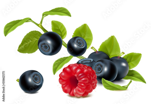 Vector. Bilberries with leaves and raspberry.