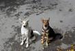 Две симпатичных собаки сидят на асфальте