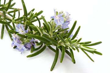 Rosmarinzweig mit Blüten I, Makro, isoliert