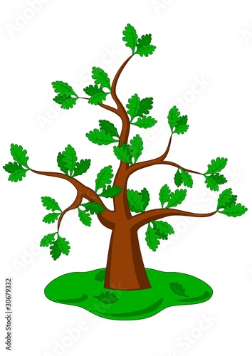 Cartoon oak on a white background. Vector drawing.