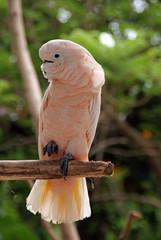 Kakadu auf Ast