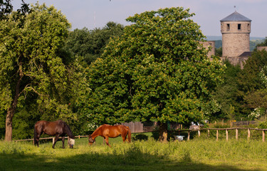 Horses and Castle