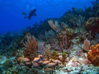 Cayman Brac Dive Master