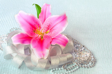 Beautiful pink lily flower on the silver textile  background