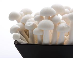 Oyster Enoki Mushrooms