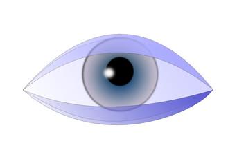 Auge bionic