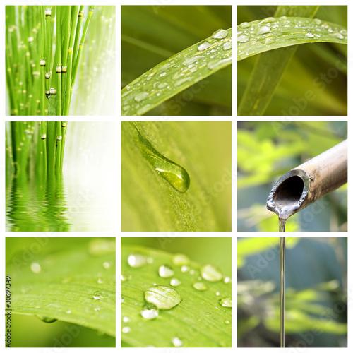 Collage nature et eau
