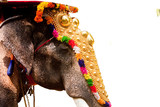 Indian Elephant on festival