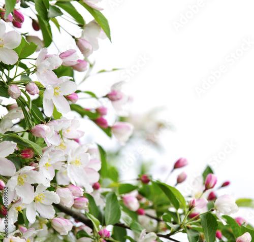 wiosenne-kwiaty-jabloni
