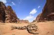 old tree in mountains of Wadi Rum, Jordan