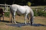 cheval bache