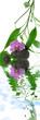 décor zen massage, soins du corps, orchidée et bambou