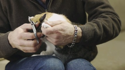 man trimming cat claws