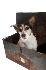 dog in container