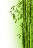 Fototapety Бамбуковая роща, фон из стеблей бамбука