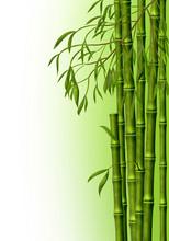 Бамбуковая роща, фон из стеблей бамбука