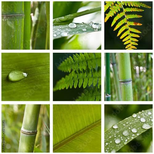 zielony-kolaz-bambusow