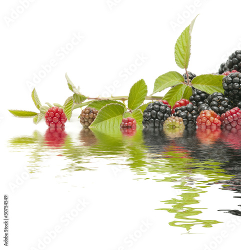 reflection of berries
