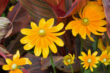 Yellow flower and red leaves