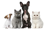 Fototapety Group of dogs and cats in front of white background
