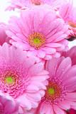 Fototapete Blumenstrauss - Muttertag - Blume