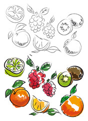 FRUITS ILLUSTRATION 2
