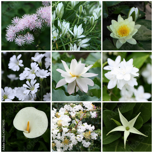 White flowers collage