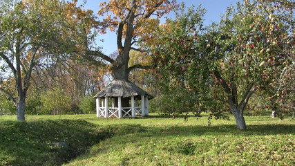 Gasebo with old oak tree inside on  beautiful autumn day