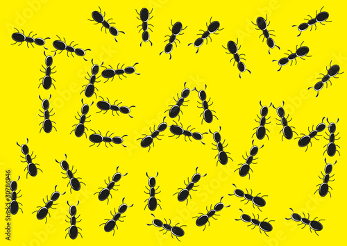 the ant team