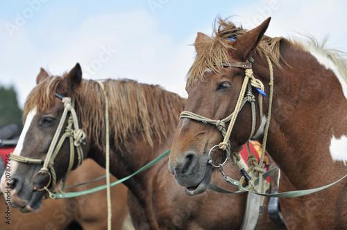 馬のポートレート © TOMO