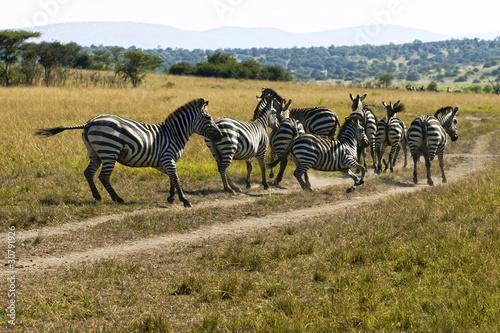 Zebras - Akagera National Park, Rwanda