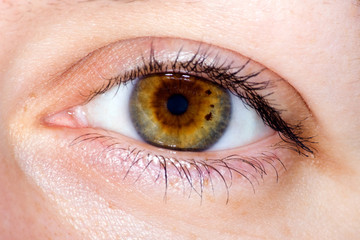 Close up of brown female eye