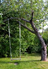 Empty Toy Swing in apple tree