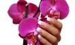 Frauenhand mit einer Orchidee