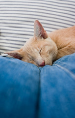 Cat sleeping on Jeans pillows