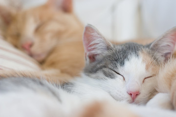 Two sleeping cats, focus on the kitten in the front