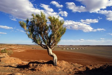 Tree in Mongolia