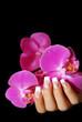 rosa Orchidee auf schwarzem Hintergrund