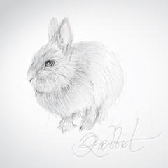 Cute Rabbit / realistic sketch (not auto-traced)
