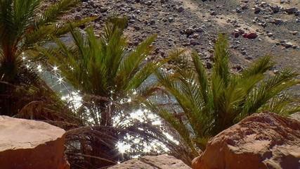 Oasi - Palme con acqua