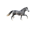 Andalusian horse on white background