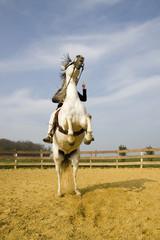 cheval cabré-2