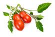 Reife Tomaten mit frischen Blättern