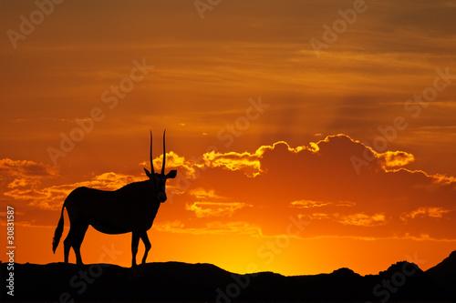 canvas print picture Gemsbok silhouette